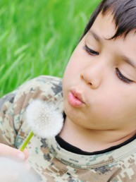 boy blowing on summer dandelion